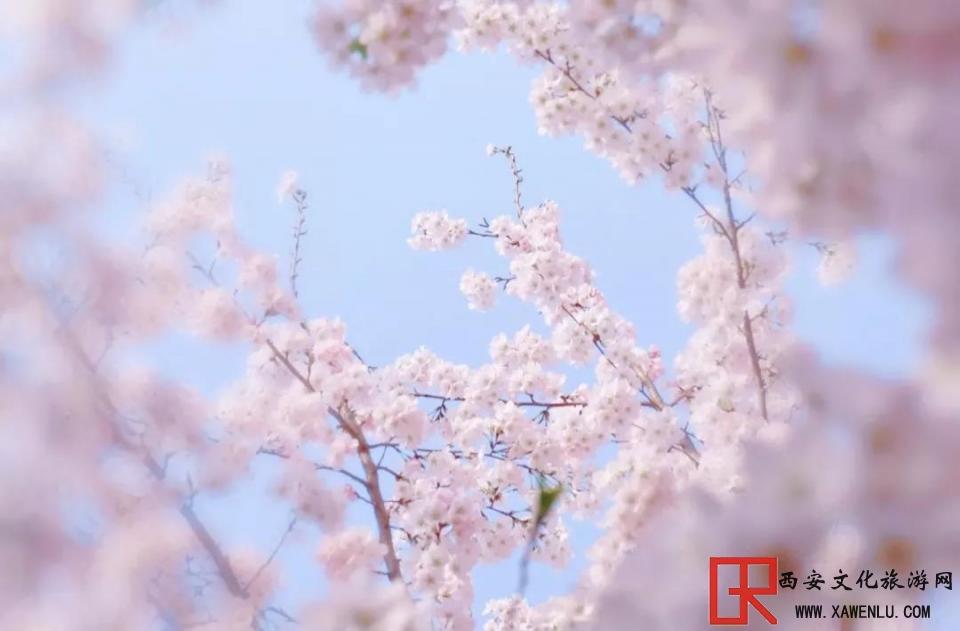 文旅下的赏花经济